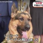 警察犬が表彰。オスのシェパードのアーバン号(3歳)の写真。プロフィールは。