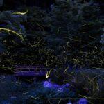 ホタル佐賀県2021の見どころ「全4か所の名所や穴場の情報満載!!」見頃時期&画像&動画等「見える化情報」+「他府県のホタル名所の情報」も見逃すな!!